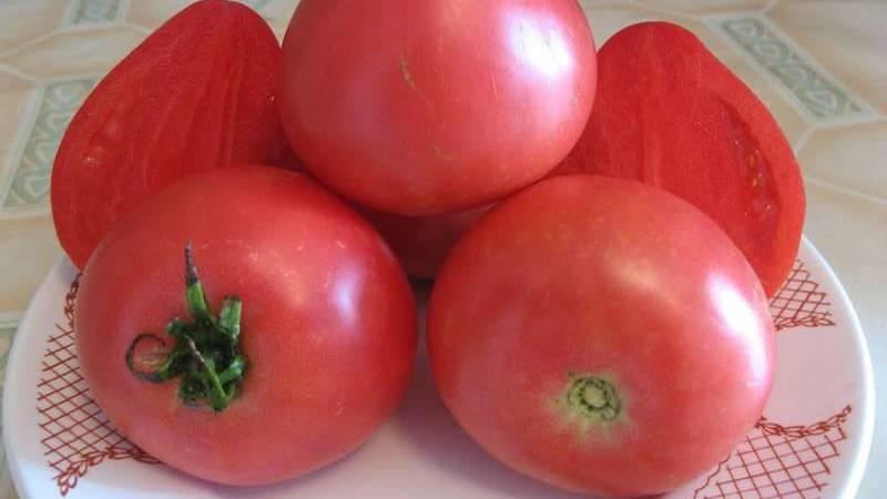 Подробное описание гибридного тепличного сорта томата «купола россии»