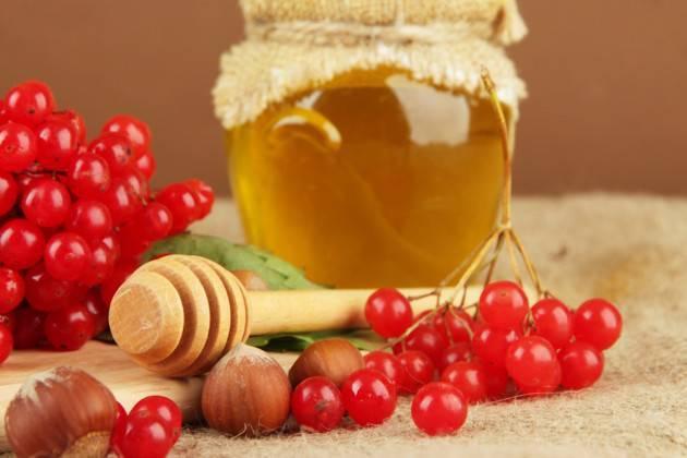 Рецепты лечения ягодой калиной, ее полезные и лечебные свойства