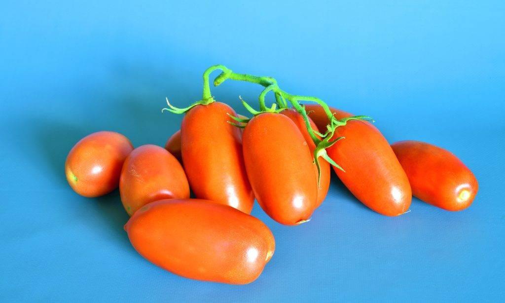Томат кукла f1: характеристика и правила выращивания гибрида