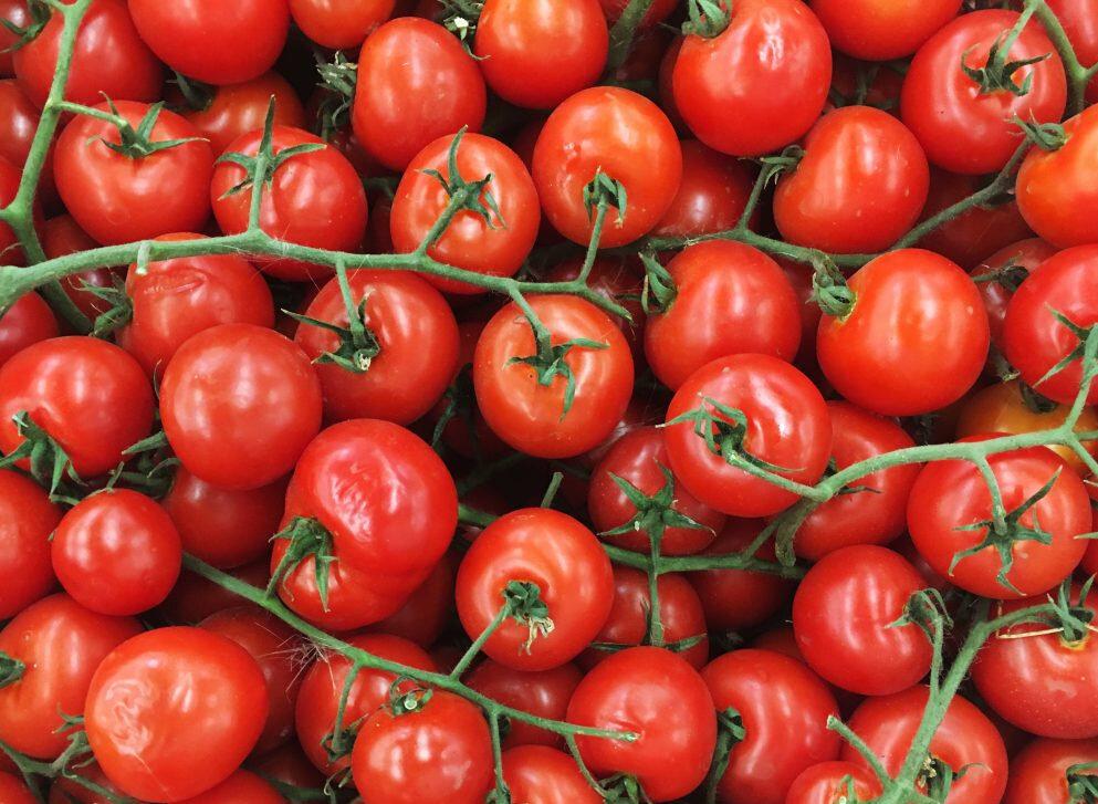 Томат матадор: характеристика и описание сорта, урожайность с фото