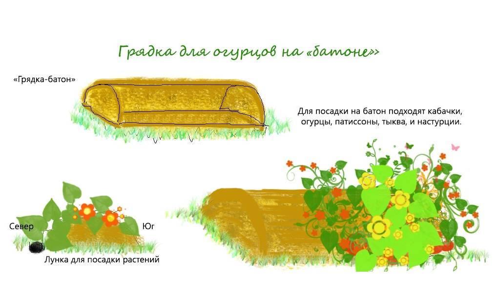 Как уберечь и спасти рассаду от заморозков в теплице из поликарбоната и в открытом грунте?
