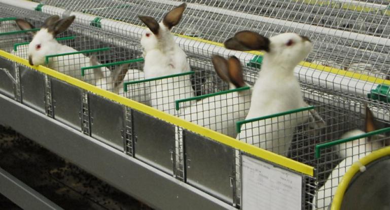 Плюсы и минусы содержания кроликов зимой и правила в домашних условиях