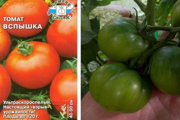 Томат яблочный спас: описание и характеристика сорта с фото и отзывами