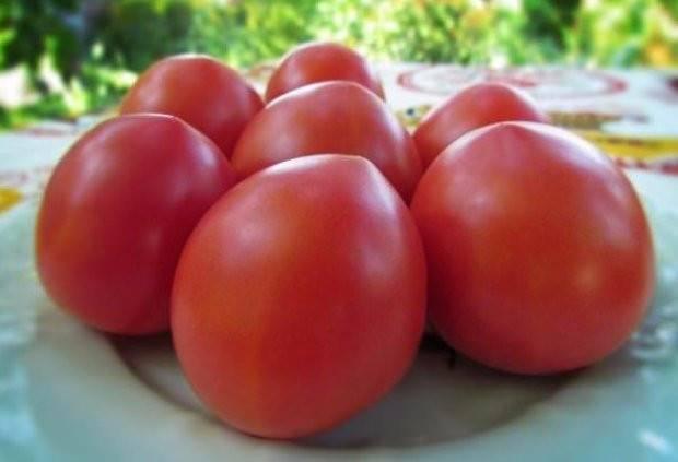 Томат солярис: описание и особенности выращивания сорта с фото