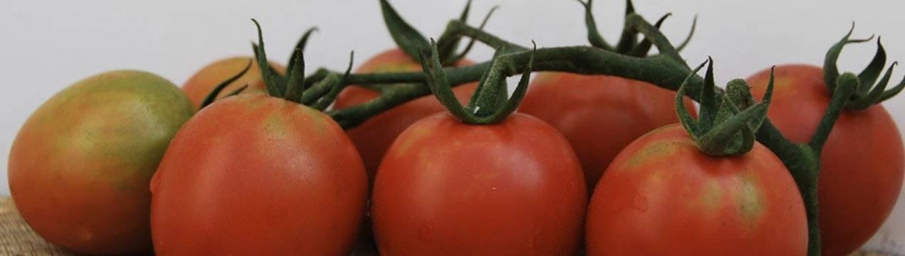 Детская сладость томат