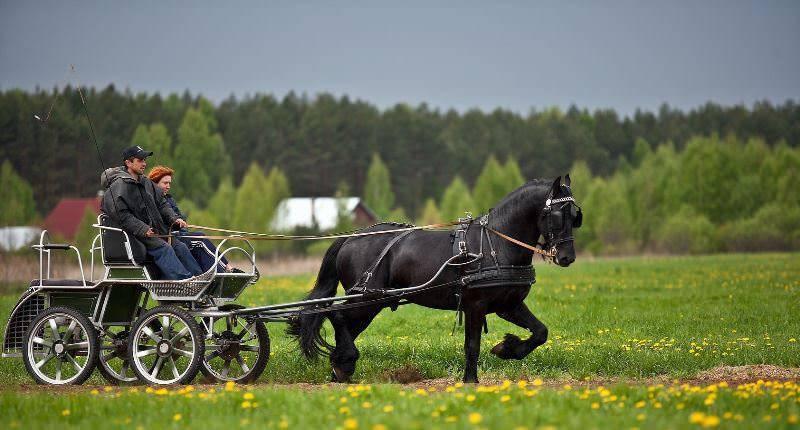 Сколько весит лошадь? средние годы жизни