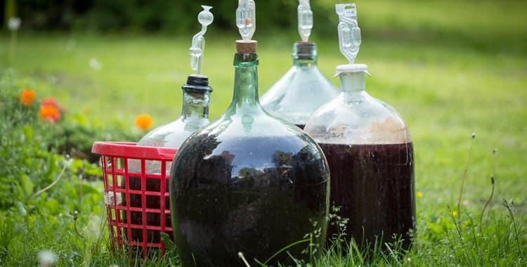 4 простых рецепта приготовления вина из зеленого винограда в домашних условиях