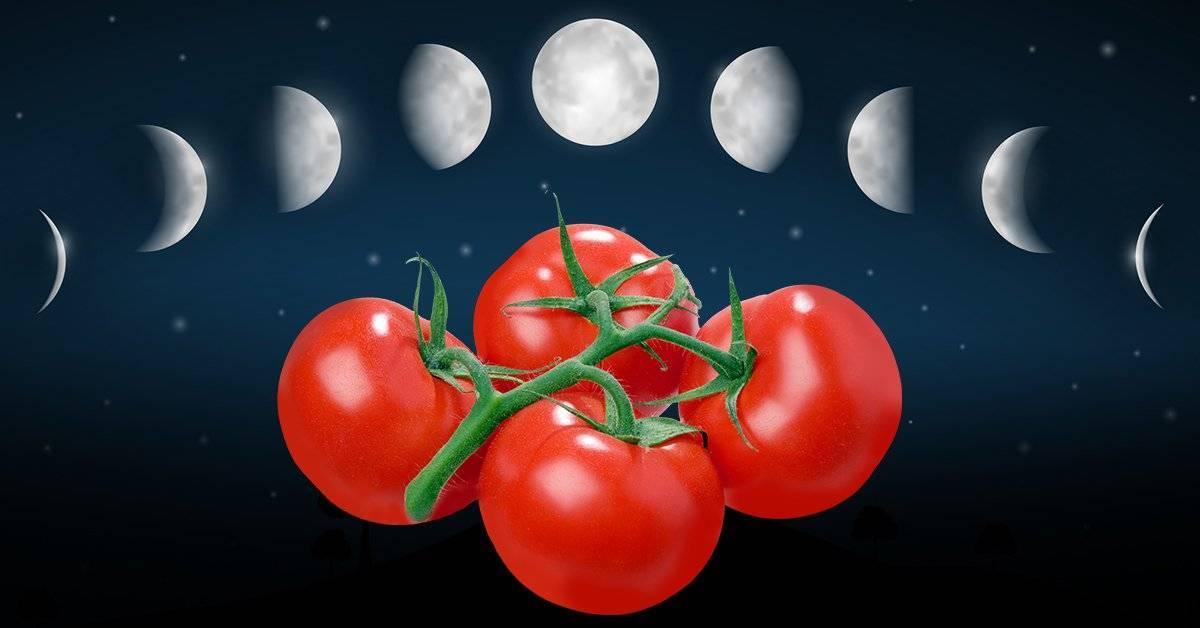 Когда сажать помидоры на рассаду в 2021 году