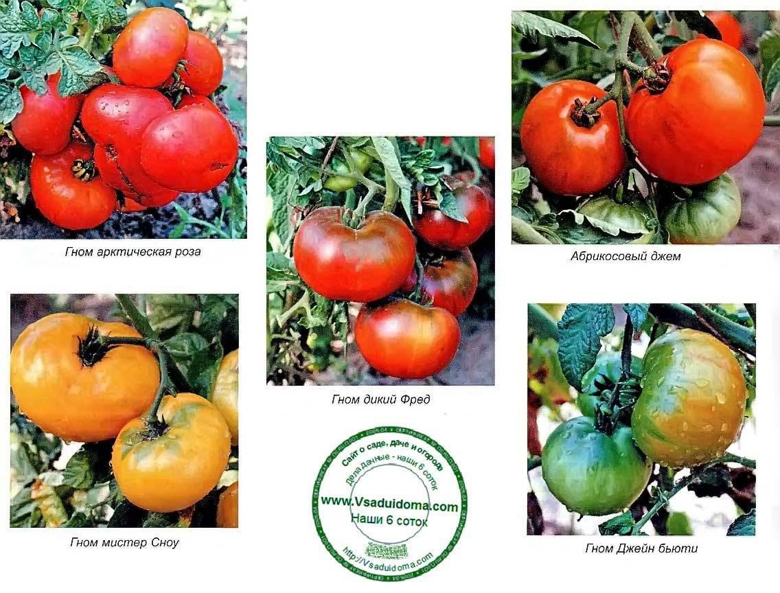 Описание сорта томата Торпедо, урожайность и выращивание