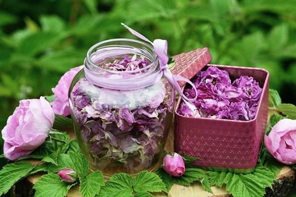 Благоухающий и полезный цветок – жасмин: применение в кулинарии, народной медицине и косметологии