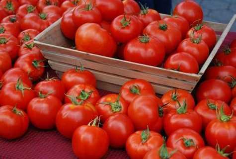 Надёжный и ранний томат валентина
