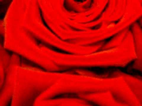Роза гранд аморе: описание и характеристики сорта, выращивание, размножение