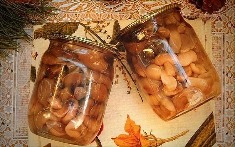 Как солить рыжики в банках на зиму горячим и холодным способом: лучше рецепты приготовления грибов