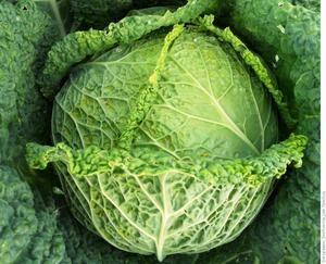 Вкуснейшие заготовки своими руками: рецепты приготовления капусты кольраби на зиму