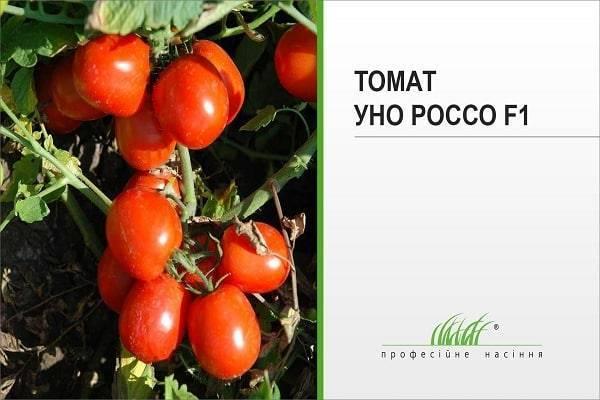 Обзор сорта томатов f1: характеристики и урожайность