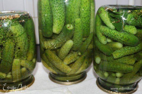 Хрустящие маринованные огурцы на зиму – 10 самых вкусных рецептов