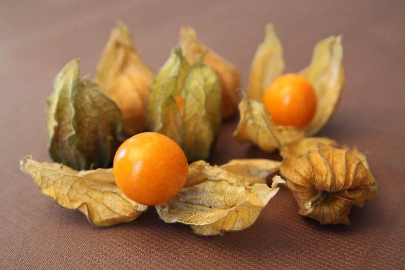 Физалис съедобный и декоративный — посадка и уход, выращивание из семян, полезные свойства.