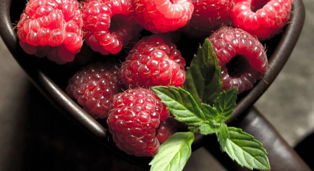Сорта малины — описание лучших видов, особенности выращивания и их свойства. советы по уходу (120 фото и видео)