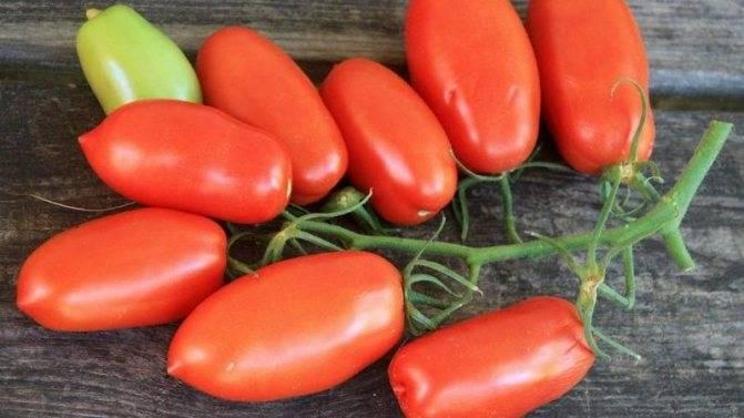 Томат кохава: характеристика и описание сорта, урожайность с фото