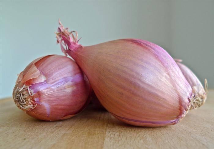 Лук-шалот: описание сортов, выращивание и уход с фото