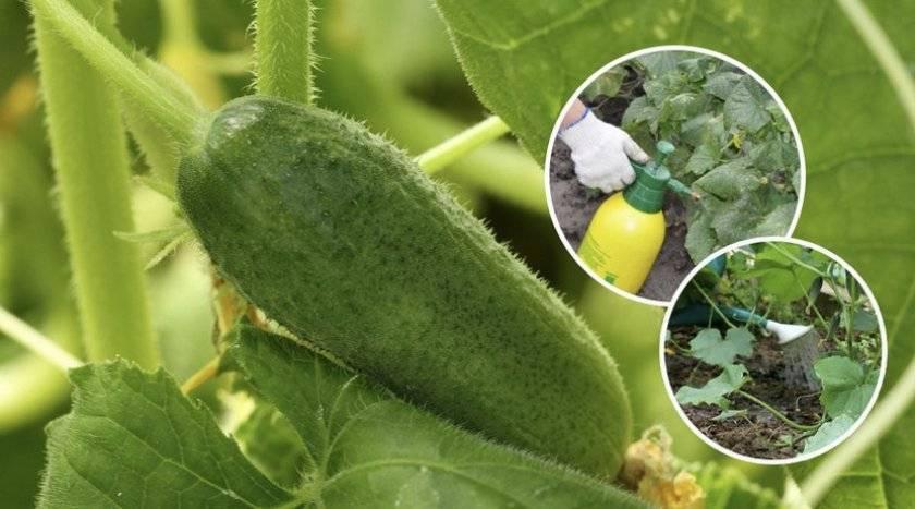 Подкормка растений йодом: как готовить раствор, как подкармливать