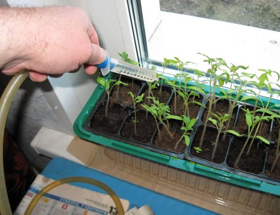 Подкормка из хлеба для огурцов и помидоров: растут на зависть соседям