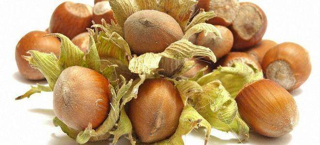 Лещина (орешник), лесной орех