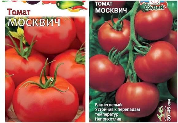Помидоры «москвич»: проверенные годами качество, урожайность, стойкость, неприхотливость