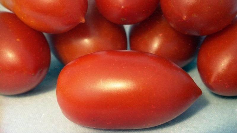 Урожайный, раннеспелый, нетребовательный к уходу и идеально подходящий для консервации томат «гулливер»