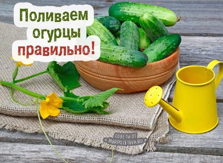 Как часто поливать овощные культуры в парнике из поликарбоната?