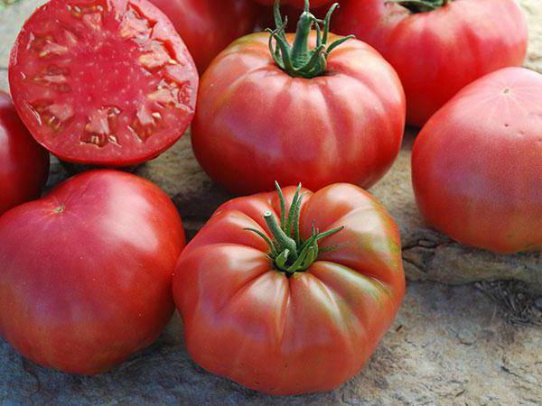 Томат дворцовый: характеристика и описание сорта, урожайность отзывы фото кто сажал