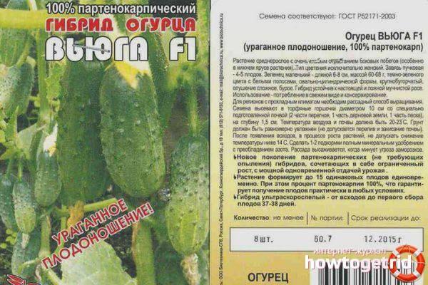 Описание сорта огурца Вьюга, его характеристика и урожайность