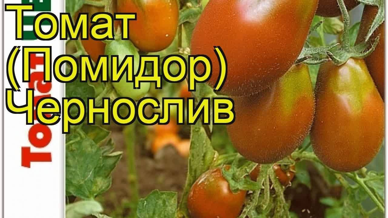 Томат ваше величество: описание и характеристика сорта, мнение садоводов с фото