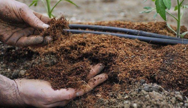 Помидорная здравница: какой кислотности должна быть почва для томатов и какой грунт обеспечит высокую урожайность?