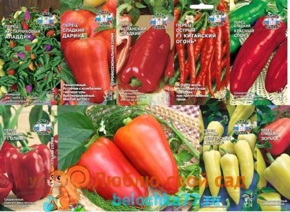Как вырастить раннеспелые томаты: сроки посева и правила выращивания