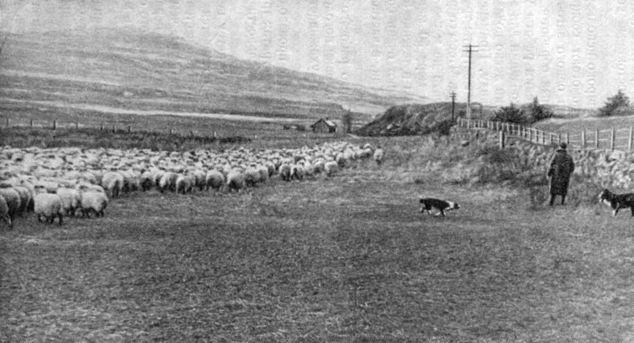 Страны-лидеры по мировому овцеводству
