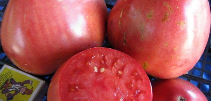Томат тяжеловес сибири: характеристика и описание сорта