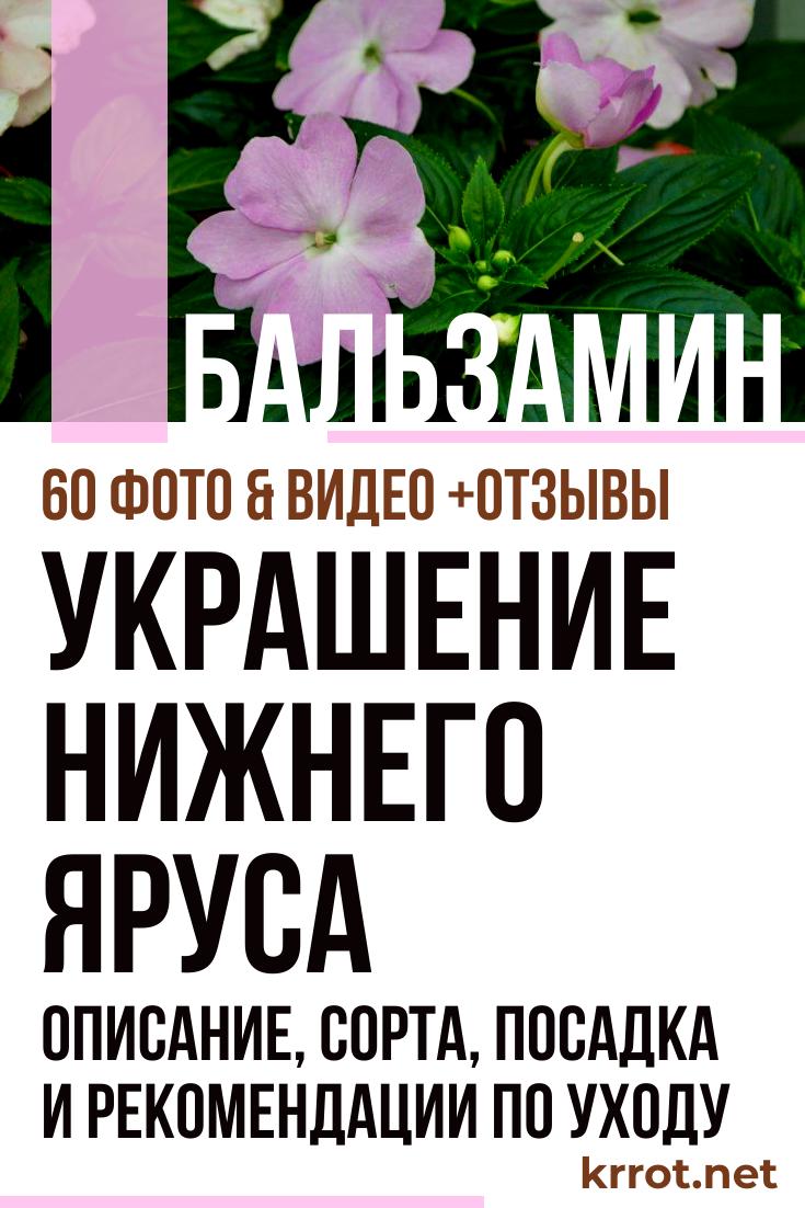 Инструкция по выращиванию разных сортов бальзамина из семян