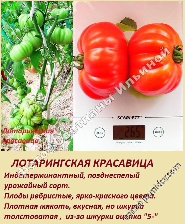 Сорт помидор лотарингская красавица. преимущества и недостатки по сравнению с другими похожими сортами