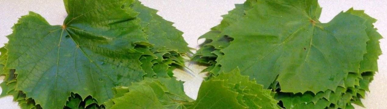 Как заготовить листья для долмы на зиму