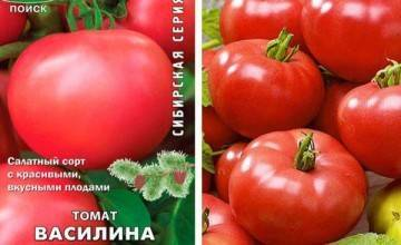 Описание сорта томат сливовка и его характеристики