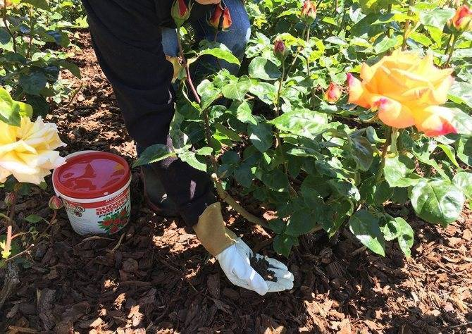 Весенняя подкормка абрикоса: основные правила и полезные советы