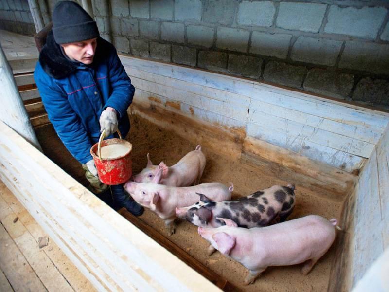 Ветеринарно-санитарные правила содержания свиней