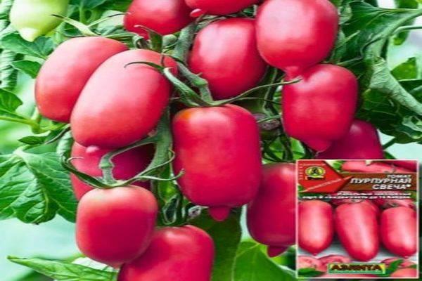 Томат абаканский розовый: фото, особенности сорта