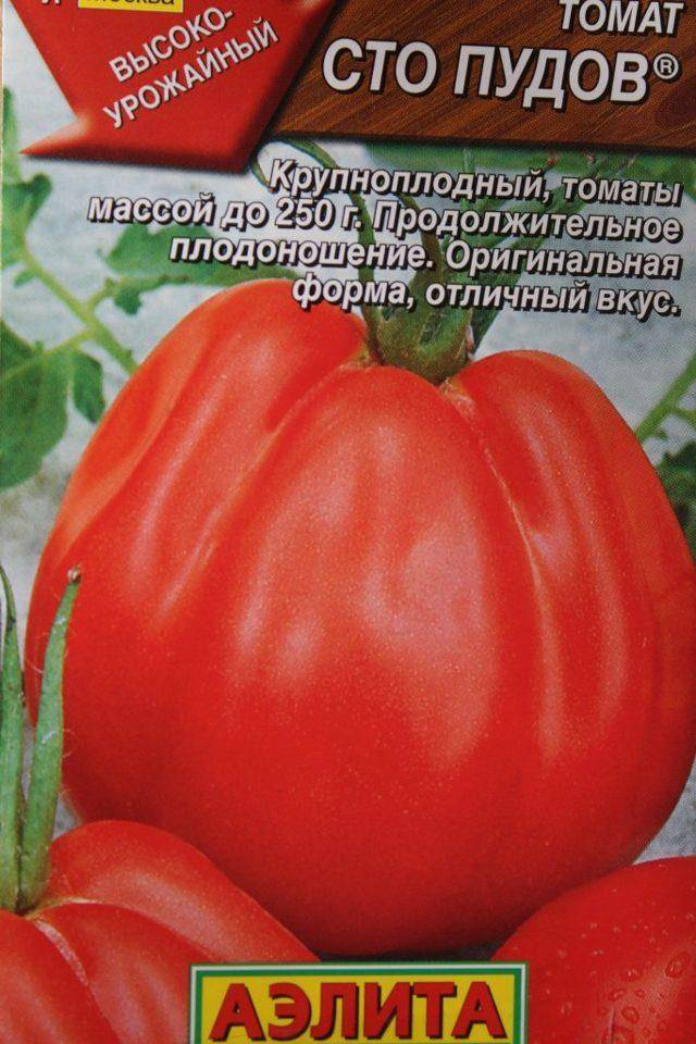 Томат сто пудов — сочетание необычной формы и немалой массы плодов