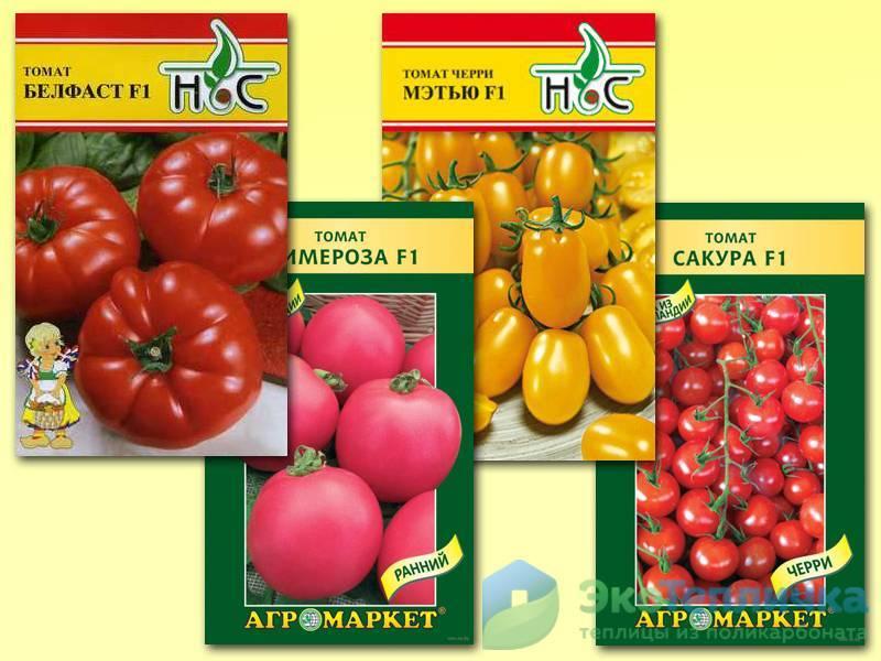 Томаты с желтыми и оранжевыми плодами: список лучших сортов — их описания и характеристики