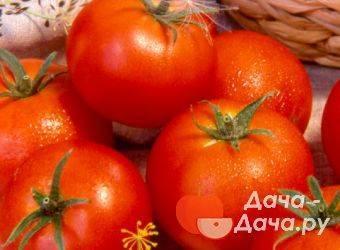 Описание сорта томата вернер, его характеристика и урожайность