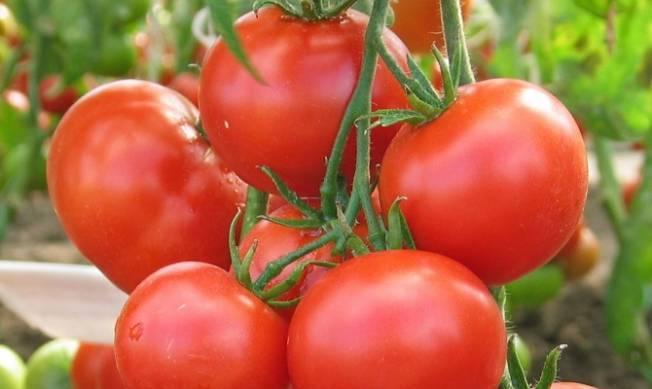 Описание сорта томата Динар, рекомендации по выращиванию и урожайность