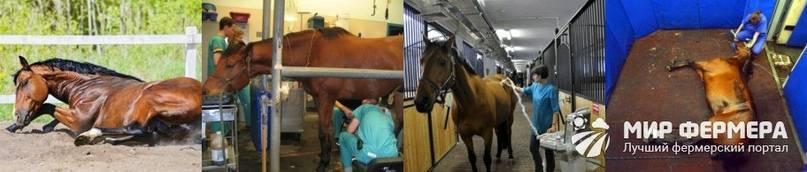 Болезни лошадей и их лечение