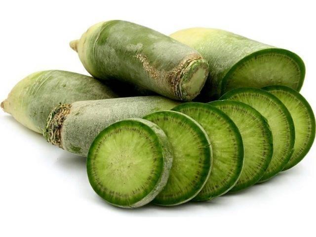 Редька зеленая: какую пользу приносит ее употребление и какой вред можно нанести организму